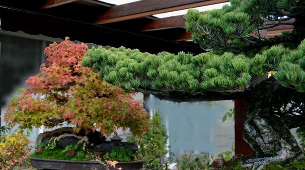 Jardín de bonsáis.
