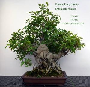 Curso especies tropicales
