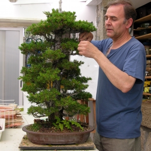 Pinus P Kovonde
