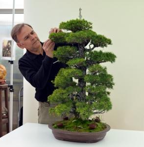 Pinus P Kovonde. Pinzado
