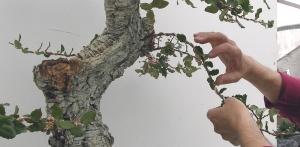Torsion de ramas