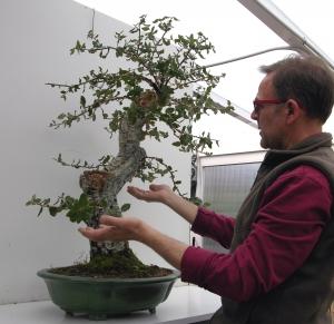 Colocación de ramas