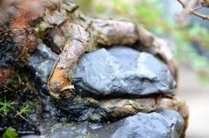 Raíces agarran la roca.