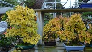 Carpes en otoño