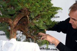 Descubirmos tronco