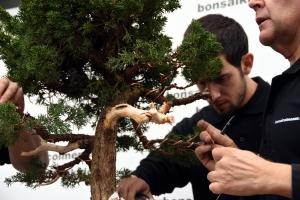 Alambrado ramas bajas