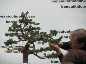 Colocación ramas