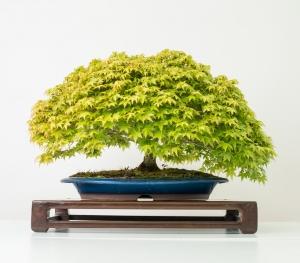 Bonsai 6_0023-min