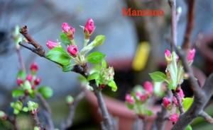 manzano-min