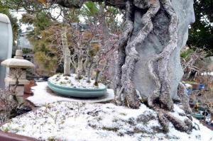2-febrero-nieve-min