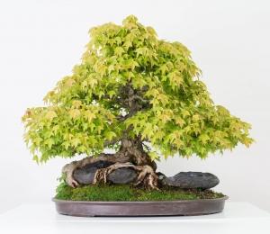 bonsai-6_0056-min