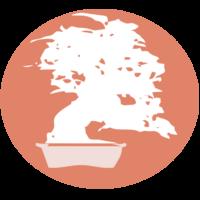 Blog Bonsai Colmenar